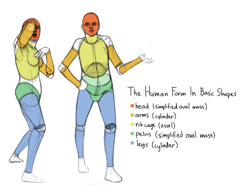 Standard Proportions Of The Human Body Makingcomics